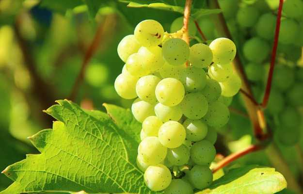 Use grapes to get rid of migraine