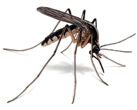 Finally why does mosquito bite, know the whole thing