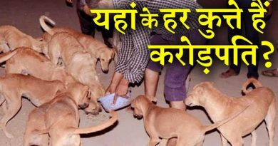 All the dogs in this village of India are millionaires, know the truth behind it