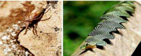 See some snakes that appear only to lucky people. You will also be amazed.
