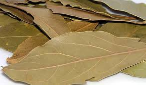 You will be shocked knowing the benefits of bay leaf