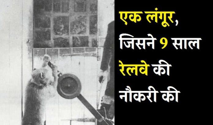 Know how this langur took 9 years railway job