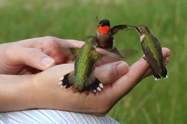 These are the 3 smallest birds in the world