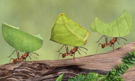 Ants can lift 50 times more weight than their weight, but humans cannot do it, why know?