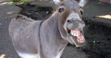 Donkey arrested for gambling in Pakistan, people mocked