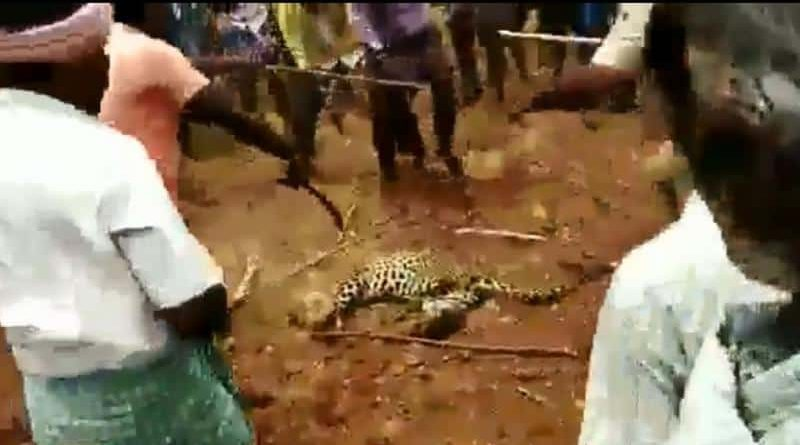 After Hathini and cow, now torture with leopard kills beating in Assam