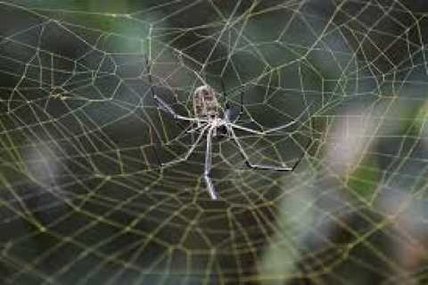 The 'spider' made the woman 'penetrate her ear', created a trap inside, know what happened then