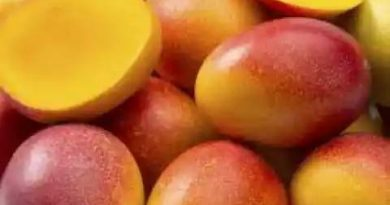 It is the most expensive mango in the world, hearing the price of 1 kg mango