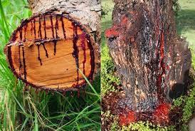 A magical tree that cuts blood