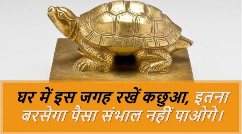 Keep turtle in this place at home, you will not be able to handle this much money