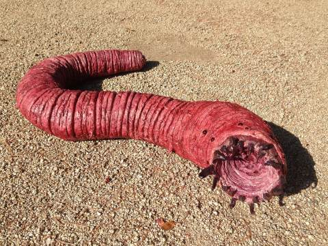 What is the 'Mongolian Deathworm' that created terror in Mongolia, know
