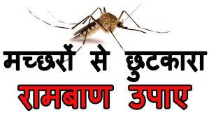 कमरों से मच्छर कम करने के कुछ सरल तरीके क्या हैं?