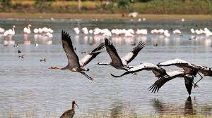 इलाहाबाद में गंगा नदी में दिखने वाले प्रवासी पक्षी कहाँ से आते हैं ? ये कितनी दूरी तय करते हैं ? जानिए
