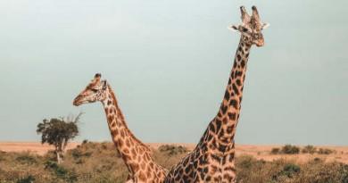 जानिए सबसे लंबे जानवर के बारे में कुछ रोचक तथ्य