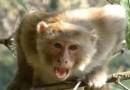 10 साल पहले बंदर ने काटा क्या मुझे रेबीज होगा? जानिए आप भी