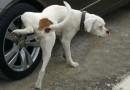 कुत्ते टांग उठाकर पेशाब क्यों करते हैं? जानिए