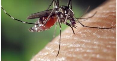 मच्छर आपको काटने के लिए अंधेरे में भी आपको कैसे ढूँढ लेता है? जानिए रहस्य