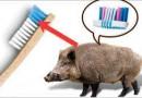क्या सूअर के बाल से ब्रश बनाया जाता है? जानिए सच