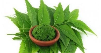 नीम की पत्तियों का उपयोग किस प्रकार और किन रोगों के लिए किया जा सकता है? जानिए