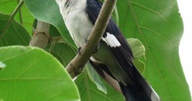 जानिए ऐसा कौन सा पक्षी है जो बारिश का ही पानी पीता है ?