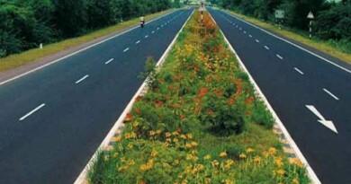 सड़क (रोड) के बीच में पेड़ क्यों लगाई जाती हैं ? जानिए