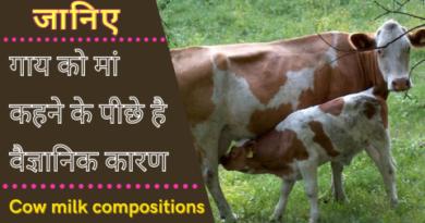 गाय को मां कहने के पीछे है वैज्ञानिक कारण, एक बार जरूर जाने